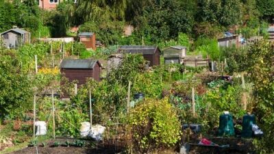 Serb favourite pastime under threat; Pickles approves 59 allotments sales